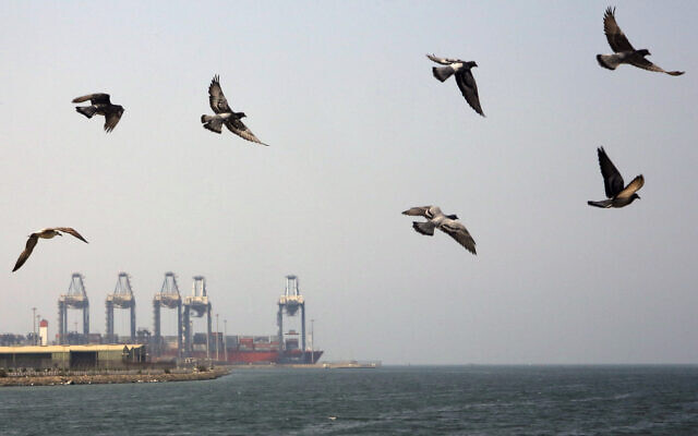 File: Seagulls fly over the Red Sea port city of Jiddah, Saudi Arabia, Oct. 11, 2019 (AP Photo/Amr Nabil)