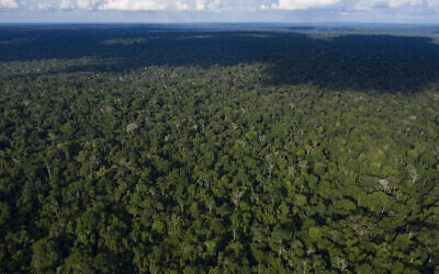 This November 22, 2019, aerial photo shows trees at the Renascer Reserve in the Amazon rainforest in Prainha, Para state, Brazil (AP Photo/Leo Correa)
