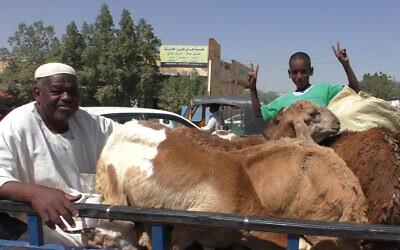 A boy waves on the back of a cattle truck in Khartoum, Sudan, November 2020. (Ziv Genesove)