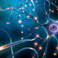 Illustrative: A neuron network with electrical activity of neuron cells (libre de droit; iStock by Getty Images)