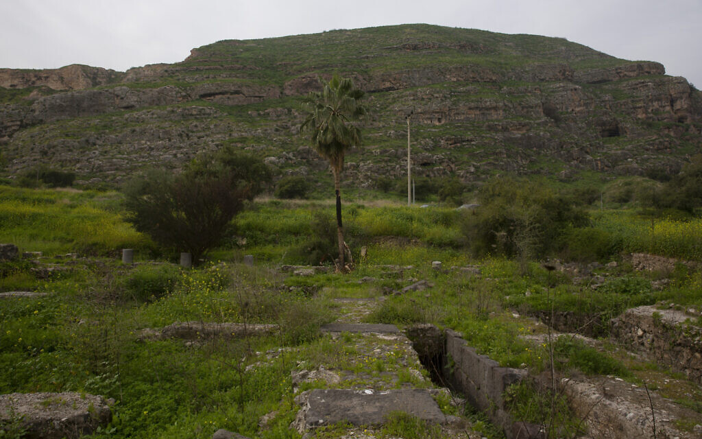 At the foot of Mount Bernice, stones from the Al-Juma (Friday) Mosque are visible through overgrown plants, in Tiberias, northern Israel, Wednesday, Jan. 27, 2021. Archaeologists said recent excavations at the ancient city of Tiberias have discovered the remnants of one of the earliest mosques in the Islamic world. (AP Photo/Maya Alleruzzo)