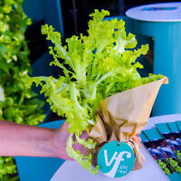 Produce grown using Israeli start up Vertical Field's farming system. (Courtesy/Vertical Field)