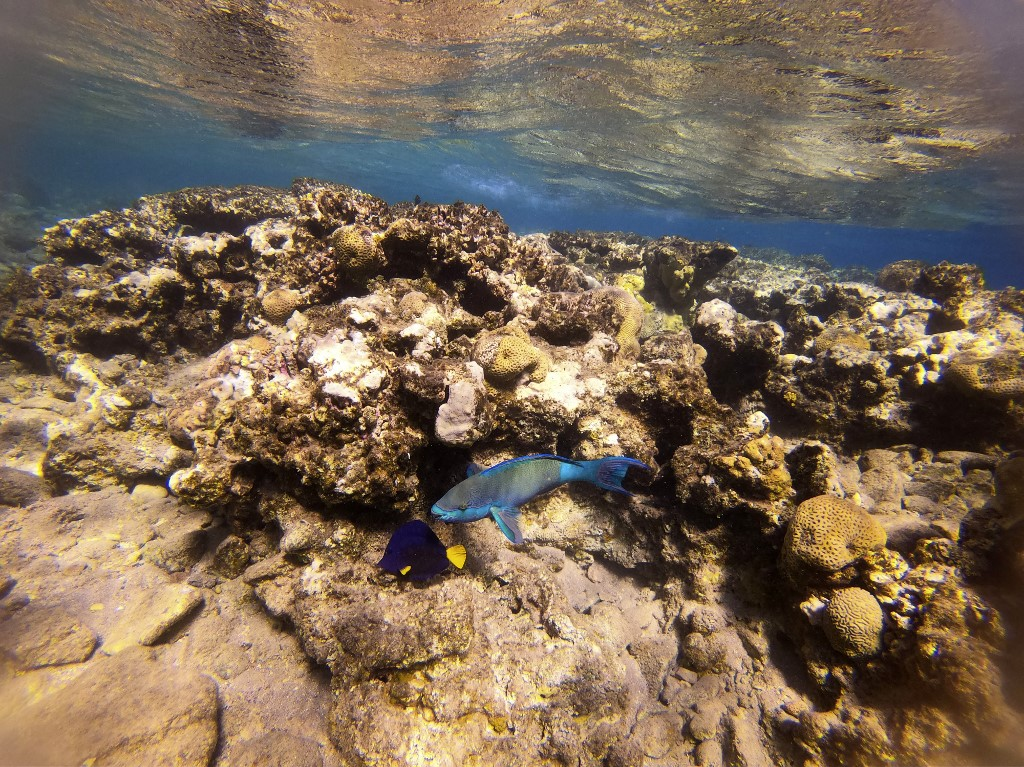 This picture taken on February 10, 2021 shows a view of marine life at a coral reef in the Red Sea waters off the coast of Israel's southern port city of Eilat.(MENAHEM KAHANA / AFP)