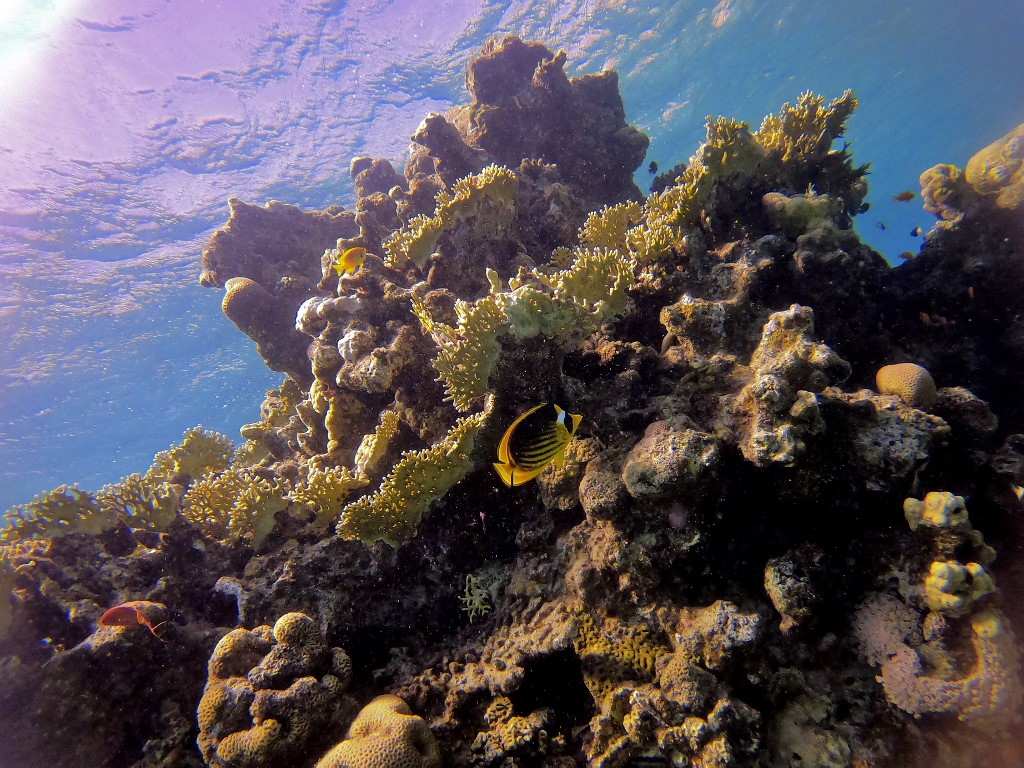 This picture taken on February 10, 2021 shows marine life at a coral reef in the Red Sea waters off the coast of Israel's southern port city of Eilat. (MENAHEM KAHANA / AFP)