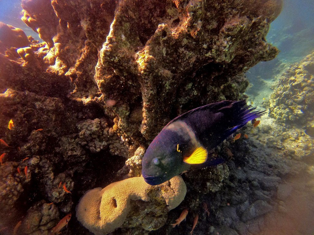 This picture taken on February 10, 2021 shows a view of marine life at a coral reef in the Red Sea waters off the coast of Israel's southern port city of Eilat.  (MENAHEM KAHANA / AFP)
