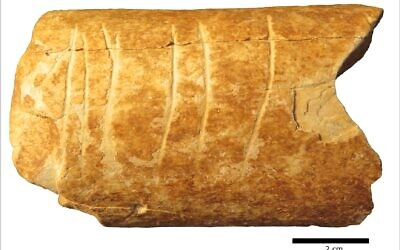 A bone fragment discovered near Ramle, Israel with deliberate etchings on that may be the earliest-known use of symbols. (Marion Prévost)