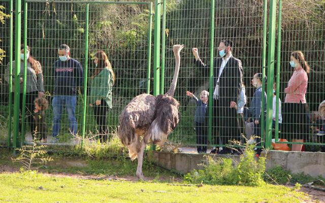 People enjoy a park in Ashdod on February 14, 2020. (Gershon Elinson/Flash90)