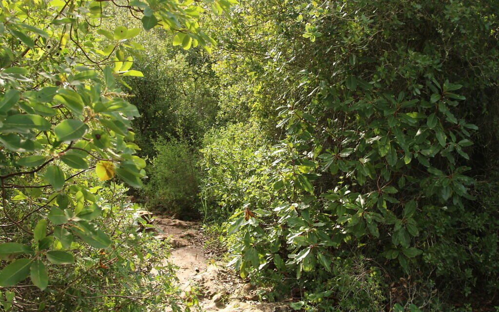 An enchanting trail on the 45-minute nature hike that circles the peak above the Ktalav Riverbed. (Shmuel Bar-Am)
