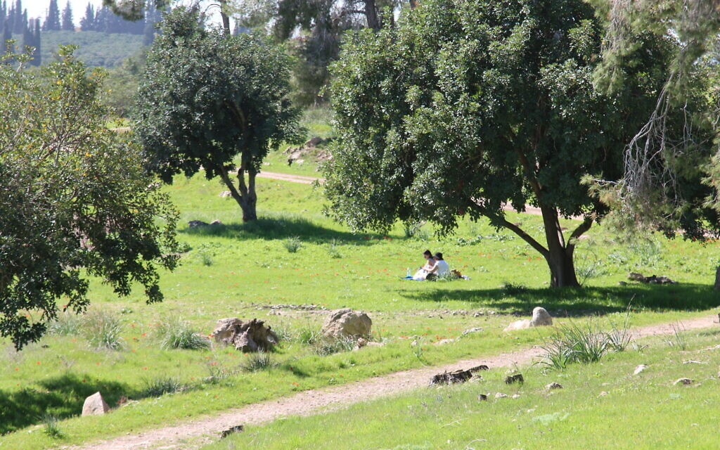 A forest below what is likely the biblical city of Ziklag. (Shmuel Bar-Am)