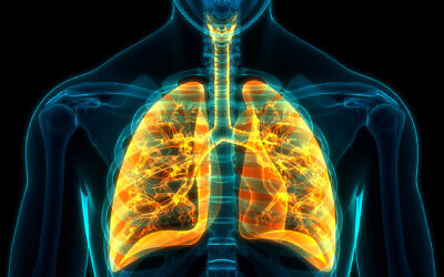 Illustrative: Human respiratory system (magicmine; iStock by Getty Images)