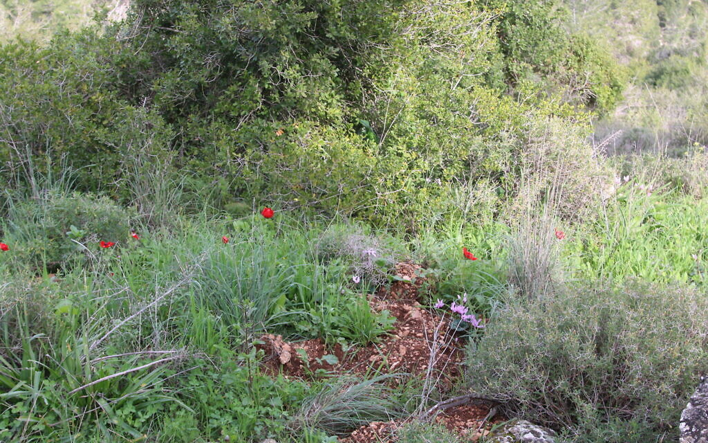 The nature hike that circles the peak above the Ktalav Riverbed. (Shmuel Bar-Am)