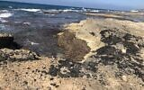 Tar on the rocks at Achziv beach, February 25, 2021. (Sue Surkes/Times of Israel)