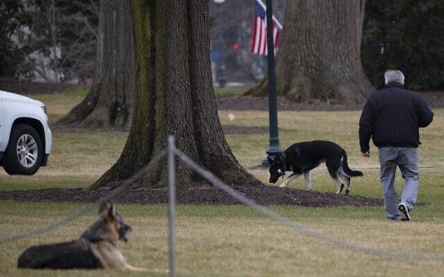 In this file photo taken on January 25, 2021 First dogs Champ and Major Biden are seen on the South Lawn of the White House in Washington, DC (JIM WATSON / AFP)