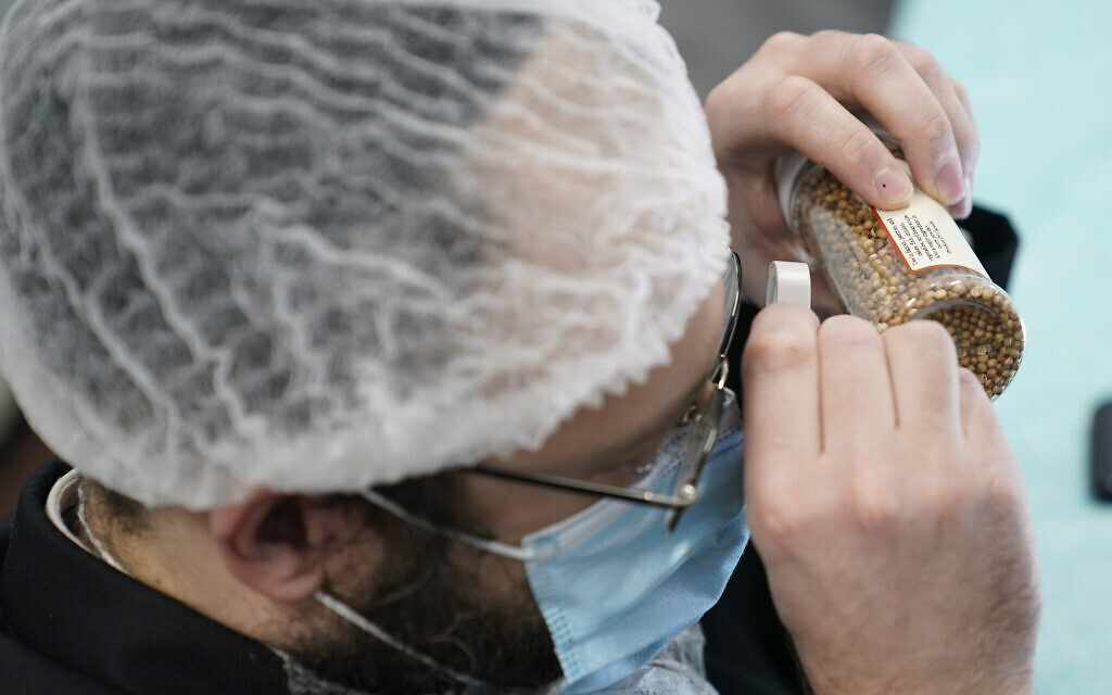 While waiting on a delivery at Hanan Products, Rabbi Mendel Einhorn catches up on some work from another job by looking for insects in samples of their products on Jan. 7, 2021, in Hicksville, N.Y. (AP Photo/Seth Wenig)