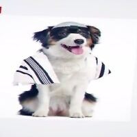A frame from a United Torah Judaism ad that appeared to compare Reform Jewish converts to dogs. (Screenshot)
