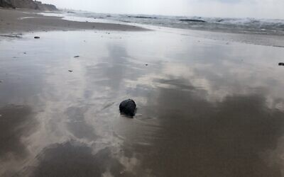 A fresh ball of tar on the beach at the Gador Nature Reserve in northern Israel, March 2, 2021. (Sue Surkes/Times of Israel)