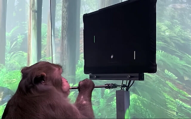 A macaque plays pong with its mind as a part of a project by Elon Musk startup Neuralink. (Screenshot/YouTube)