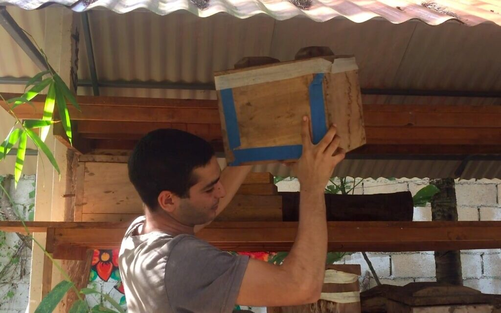 Nataniel Sagi lowers a box containing an old beehive at his bee sanctuary on Cozumel Island in Mexico, March 2021. (Julie Masis)