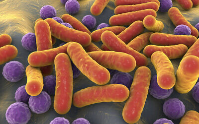 A 3D illustrative image of rod-shaped bacteria and cocci in the human microbiome (Dr_Microbe; iStock by Getty Images)