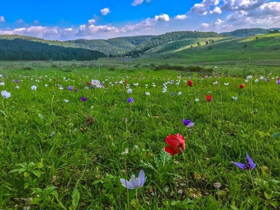 Peace Valley in spring. (Headquarters, the Protest to Save Peace Valley)