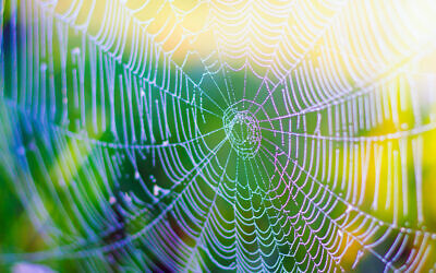 An illustrative image of a spider web and spider silk (Roman Budnyi; iStock by Getty Images)