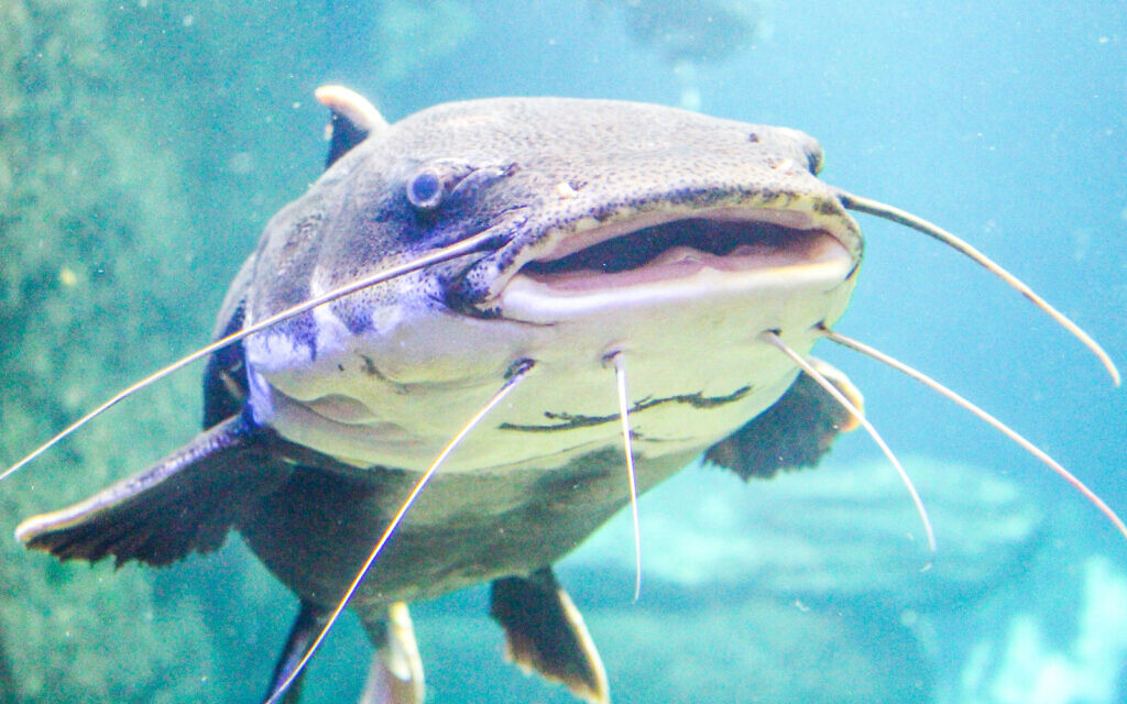 The study's authors found '...significant numbers of scaleless fish remains, especially catfish.' (iStock)