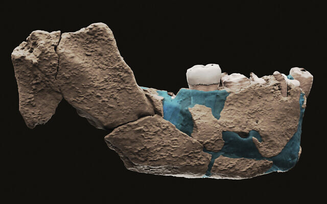 This undated image provided by Tel Aviv University in June 2021 shows a virtual reconstruction of a human ancestor mandible found in Nesher Ramla. (Ariel Pokhojaev, Sackler Faculty of Medicine, Tel Aviv University via AP)