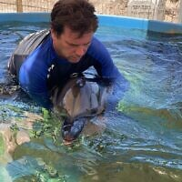 Nature and Parks Authority staff treat a wounded dolphin at the Sea Turtle Rescue Center in Mikhmoret, June 12, 2021 (Yali Mivorakh/Israel Nature and Parks Authority)