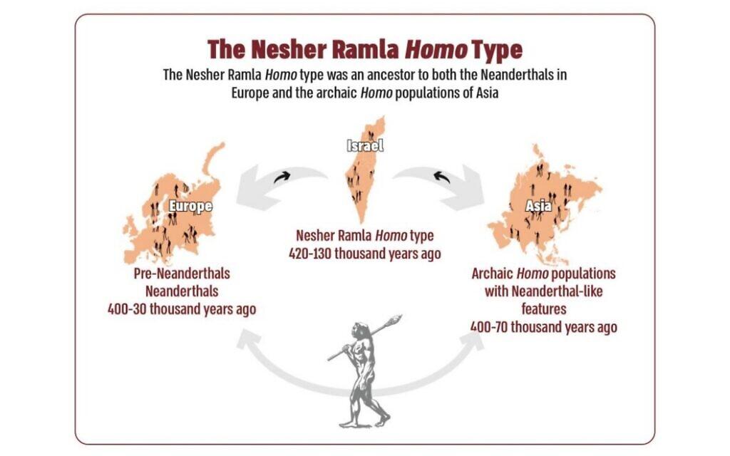 The Nesher Ramla Homo Type (Tel Aviv University graphic)