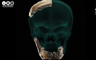 """Image showing skull and jaw fragments of what Tel Aviv University scientists identified as the """"Nesher Ramla Homo Type... a new type of prehistoric human."""""""
