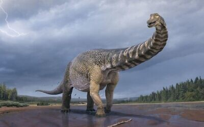 An illustration of 'Cooper', the largest dinosaur found in Australia. (Vlad Konstantinov/Queensland and Eromanga Natural History museums)