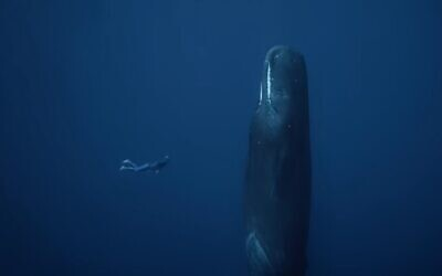 Illustrative: A diver with a whale (video screenshot)