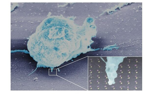 A lymphocyte on the new Ben Gurion University chip invented for cancer research (Esti Toledo and Dr. Guillaume Le Saux)