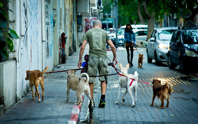 A man walks dogs in the south Tel Aviv neighborhood of Florentine, on November 6, 2018. (Moshe Shai/Flash90)