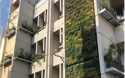 A building on the campus of Bar Ilan University, near Tel Aviv, whose facades have been largely covered by vegetation. (BIU Vertical Fields Project)