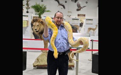 Rabbi Natan Slifkin holds Shayna, an albino Burmese python. (The Biblical Museum of Natural History)