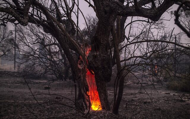 This picture taken on August 9, 2021 shows a tree trunk burning during a wildfire at the village of Pefki on Evia (Euboea) island, Greece's second largest island (ANGELOS TZORTZINIS / AFP)