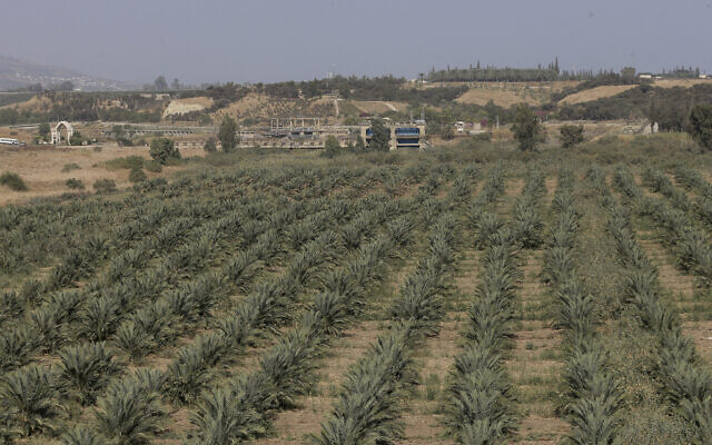A general view shows agricultural land at the border area of Baqoura, near the Israeli-Jordanian border, on Wednesday, Nov. 13, 2019. (AP Photo/Raad Adayleh)