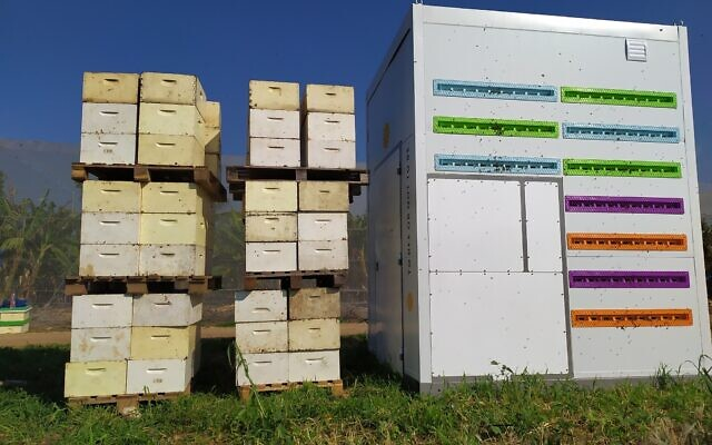 Beewise's automated Beehome next to traditional beehives. (Courtesy)
