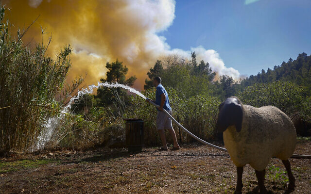 An Israeli tries to extinguish a forest fire west of Jerusalem, August 15, 2021. (Yonatan Sindel/Flash90)