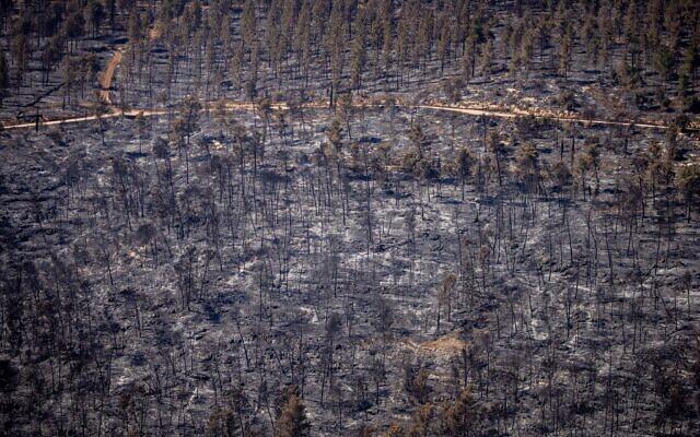 Devastation in the Jerusalem Hills following a major wildfire, August 22, 2021. (Yonatan Sindel/Flash90)
