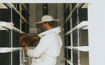 Inside the Beehome, an autonomous, automated hive by Israeli startup Beewise that can house up to 24 bee colonies. (Courtesy)