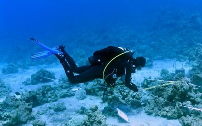 Measuring corals for the 2020 national monitoring study of the Gulf of Eilat. (Inbal Ayalon, Interuniversity Institute for Marine Sciences, Eilat)
