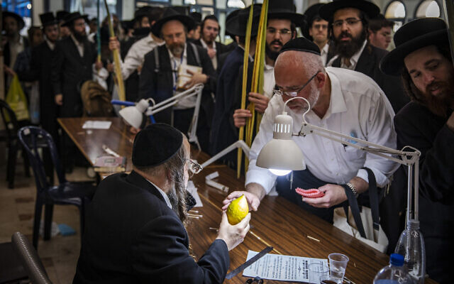 Ultra-Orthodox men examine citrons, known as an etrog in Jerusalem, on September 19, 2021, before Sukkot (Olivier Fitoussi/Flash90)