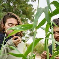 Israeli and Palestinian students explore local sustainable agriculture as part of a long-running semester academic program at the Arava Institute for Environmental Studies. (Marcos Schoenholz)