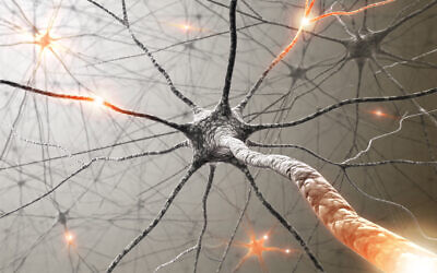 Illustrative image: nerve cells. Technion scientists report that they have slowed tumour growth in mice by attacking nerve cells. (ktsimage via iStock by Getty Images)